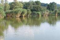 Almamelléki Horgásztó  horgásztó - Almamellék