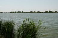 Fás tó