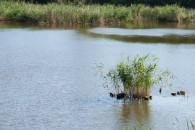 Privát horgásztó Boconád horgásztó - Boconád