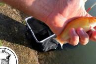 kis Blero Horgásztó - Arany compó